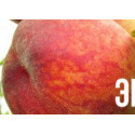 Персик Осенний Румянец