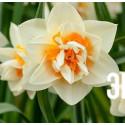 """Нарцисс """"Flower Parade"""" 3шт в упаковке"""